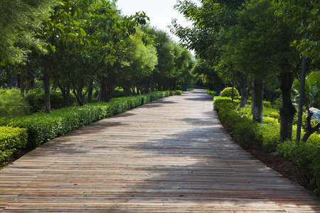 Road in a park during sunny day. Xiamen China Stok Fotoğraf