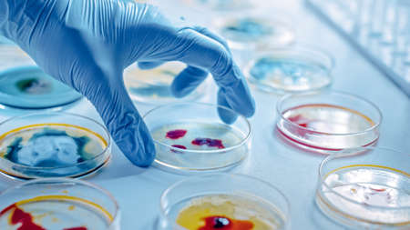 Scientist Works with Petri Dishes with Various Bacteria, Tissue and Blood Samples. Concept of Pharmaceutical Development for Antibiotics, Curing Disease with DNA Enhancing Drugs. Moving Close-up Macro