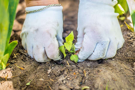 agri: Close up image of hands in gloves holding green plant