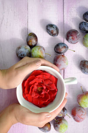 both sides: Top view of red rose in white cup. Woman holding cup from both sides. Many plumbs are organized around.