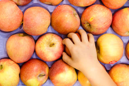 apple basket: Picture of childs hand taking apple. Store display full of yellow red apples on purple box background. Stock Photo