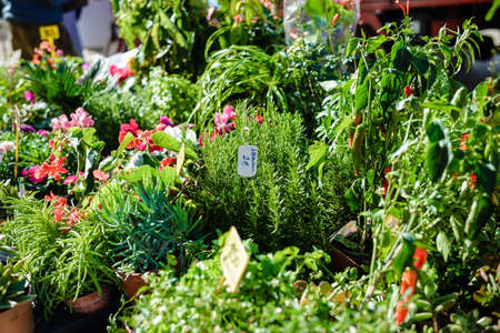 seed bed: Photo of green small green plants seedlings and blossoming flowers in pots displayed on market stand for sale