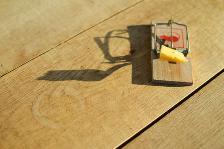 Picture of mousetrap with piece of cheese on plank floor design. Symbol of risk and temptation on wooden background. Stock Photo