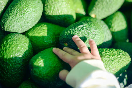 Close up of child hand holding avocado in market background 스톡 콘텐츠