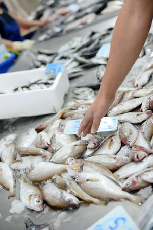 Raw fish in the ice on the seafood market stall shopping Stock Photo - 145392756