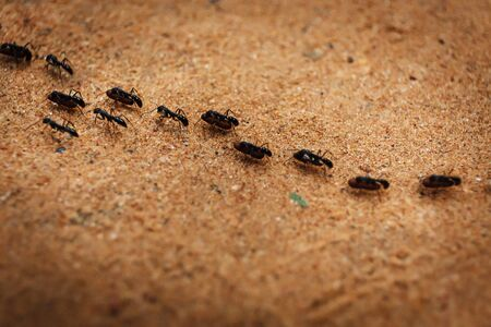 colony: Colony of ants and their teamwork in Cambodia  Stock Photo