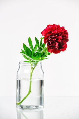 glass vase: Peony in a glass vase with water isolated on white