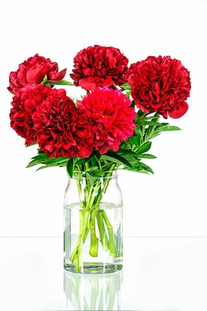 glass vase: Peonies in a glass vase with water isolated on white Stock Photo