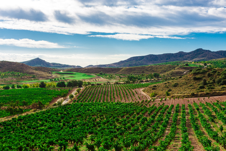 Picturesque landscape of Spain with fields of vineyards