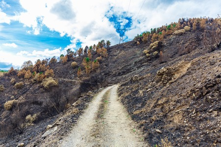 camino: Burned forest in the mountains Stock Photo