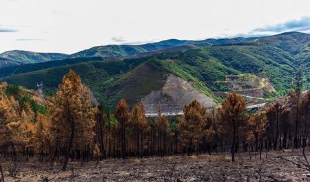la quemada: Burned forest in the mountains Foto de archivo