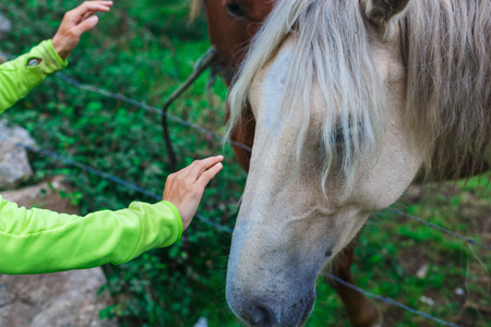 Dos hermosos caballos blancos y marrones en el campo Foto de archivo - 89522386