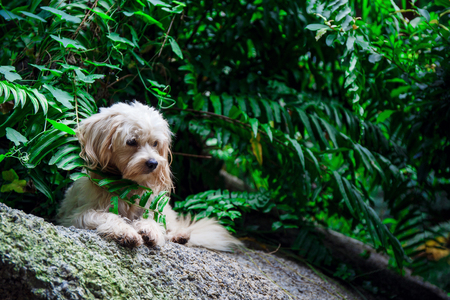 stray dog on the nature