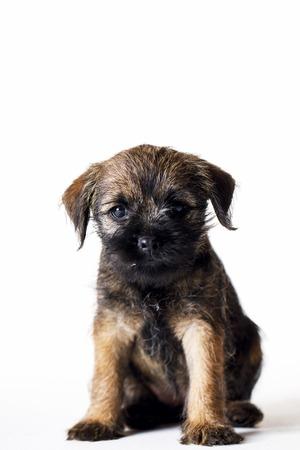 Little beautiful puppy Stock Photo