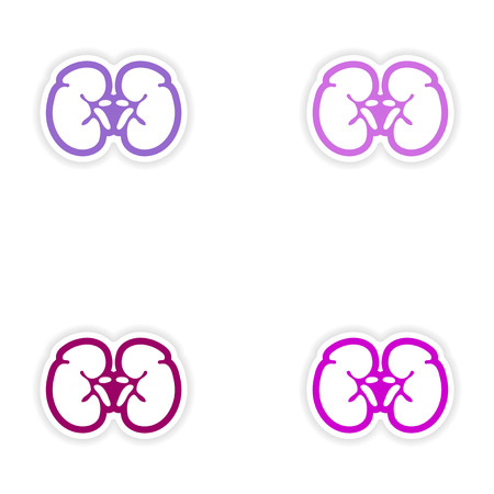 physiology: Set of paper stickers on white background human kidney