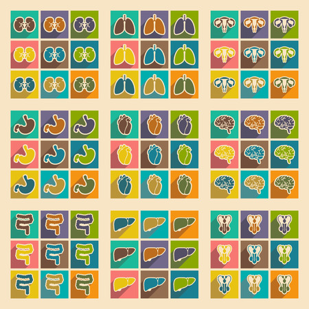 viscera: Icons of assembly internal organs in flat style Illustration