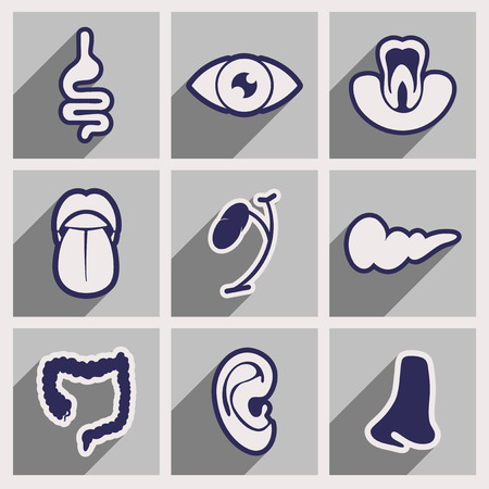 sensory: Icon of assembly internal organs in flat style Illustration
