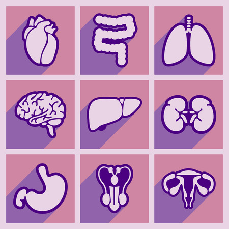 human heart anatomy: Icons of assembly internal organs in flat style Illustration