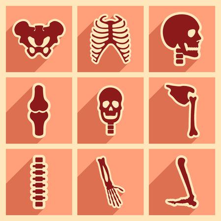 skelett mensch: Set flache Ikonen mit langen Schatten menschlichen Skeletts