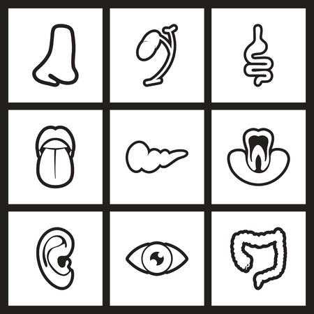 blanco y negro iconos conjunto de elegantes órganos humanos