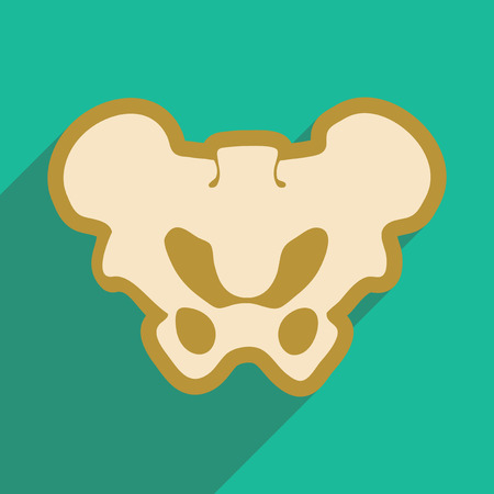 groin: flat icon with long shadow human pelvis