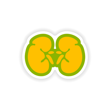 urethra: paper sticker on white background human kidney Illustration