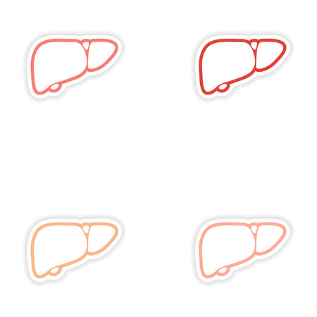 Set of paper stickers on white background human liver