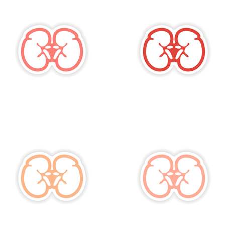 urethra: Set of paper stickers on white background human kidney