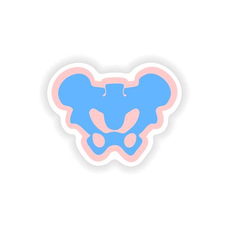 axial: paper sticker on white background pelvic bones