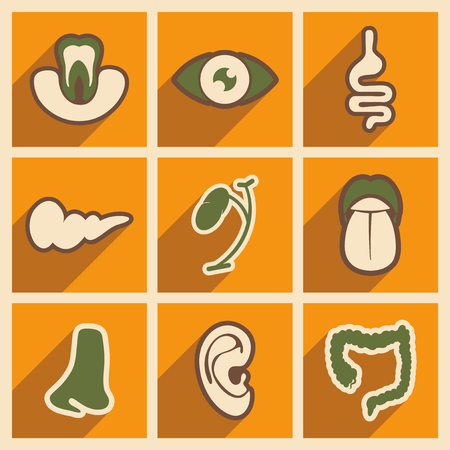 small intestine: Icon of assembly internal organs in flat style Illustration