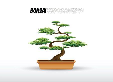 bonsai in de pot