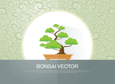 indoor garden: bonsai plant