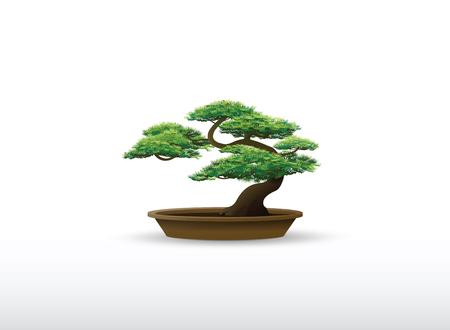 bonsai in the pot