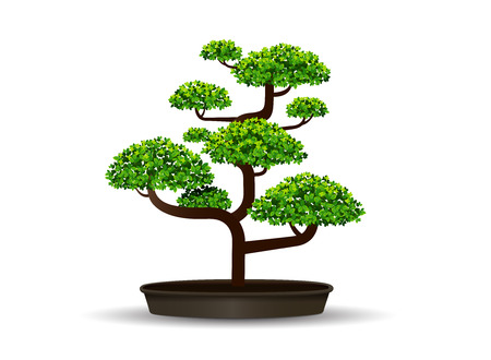 bonsai tree and leaf,vector