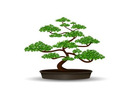 bonsai: bonsai in the pot