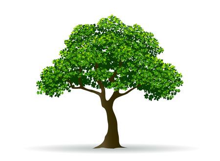ツリーと葉、木の枝、現実的な木、木のベクトル