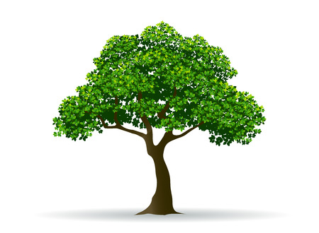 tree and leaf,tree branch,realistic tree,tree vector Vettoriali