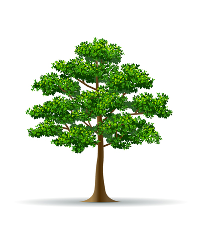 tree and leaf,tree branch,realistic tree,tree vector Ilustrace