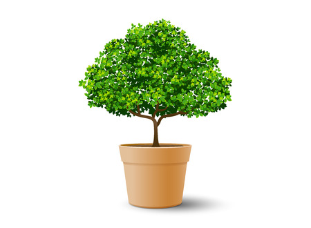 tree plant in the pot,tree and leaf,realistic tree,tree vector,bonsai Stock Illustratie