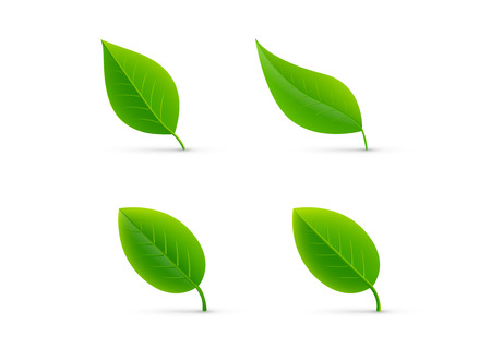 Leaf isolated green set vector illustration Иллюстрация