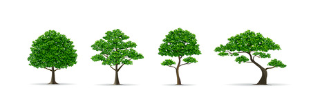 trees and leaf set realistic style vector illustration