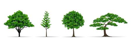 Arbres et feuilles définissent une illustration vectorielle de style réaliste Banque d'images - 79086550