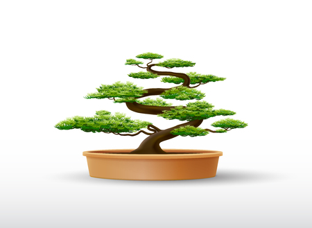 bonsai plant in the pot vector illustration