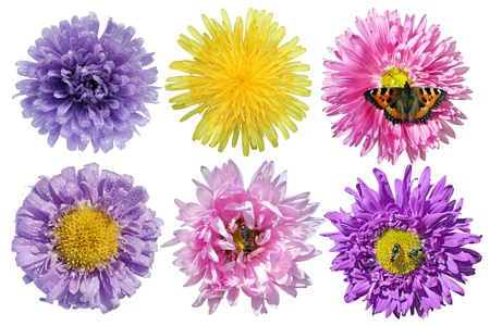 Set of flowers with butterfly, bees and drops isolated on white background. photo
