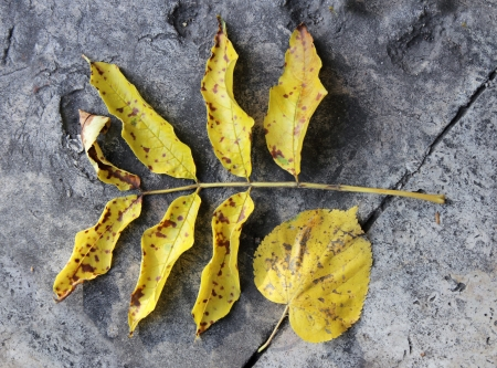flagging: Yellow faded autumn leaves against old flagging stones.