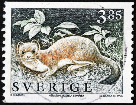 stoat: SWEDEN - CIRCA 1996: a stamp printed by SWEDEN shows the Stoat (Mustela erminea), also known as the short-tailed weasel, wild animal, circa 1996.