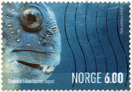 NORWAY - CIRCA 2004: a stamp printed by Norway shows Atlantic wolffish (Anarhichas lupus), also known as the seawolf, Atlantic catfish, ocean catfish, devil fish or wolf eel, circa 2004. Stock Photo - 22888310