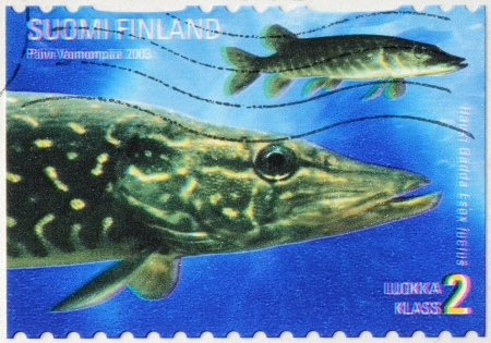 northern pike: FINLAND - CIRCA 2003: a stamp printed by FINLAND shows northern pike (Esox lucius), known simply as a pike in Britain, Ireland, most parts of the USA, or as jackfish in Canada, circa 2003.