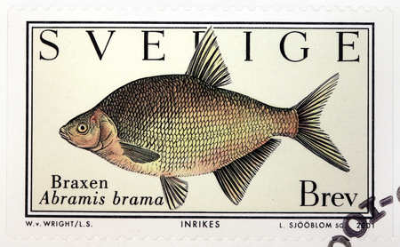 abramis: SWEDEN - CIRCA 2001: A stamp printed by SWEDEN shows Common Bream (Abramis brama) - a European species of freshwater fish in the family Cyprinidae, circa 2001