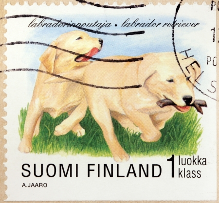 FINLAND - CIRCA 1998  a stamp printed by the FINLAND shows two Labrador Retriever dogs, circa 1998